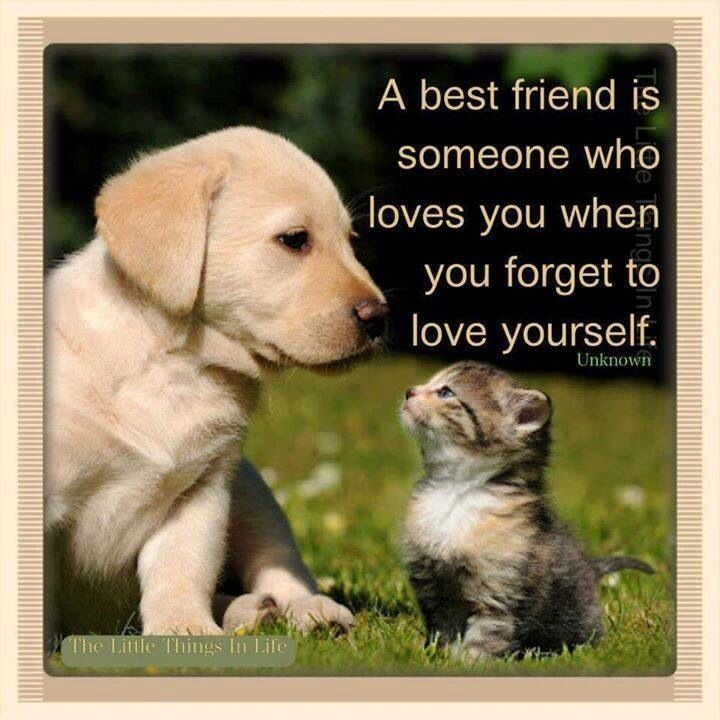 Cute-Dog-Best-Friend-Quotes-3-1